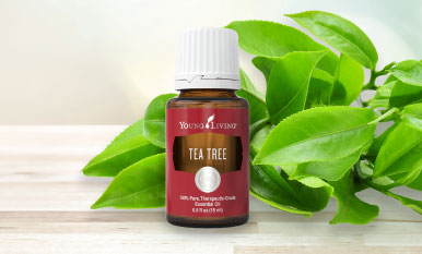 Tea Tree Oil Young Living